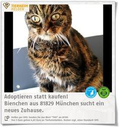Als Findelkind kam Bienchen ins Tierheim München und wurde nicht abgeholt.  http://www.tierheimhelden.de/katze/tierheim-muenchen/europaeisch_kurzhaar/bienchen/10141-1/  Bienchen hat einen starken Charakter, aber wenn man sie bändigt, dann ist sie eine liebe und verschmauste Kätzin. Sie sollte nicht in ein Zuhause mit Kindern kommen. Ein gesicherter Balkon wäre sicherli