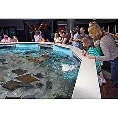 Oceans Room & Coral Reef at Oklahoma Aquarium Jenks, OK #Kids #Events