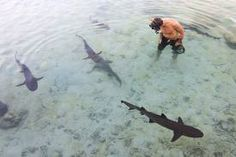 Playing and swimming with the sharks! Karimun Jawa, Indonesia.