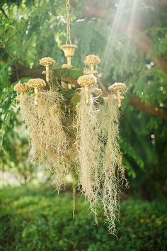 Spanish Moss draped golden chandelier | Whimsical Enchanted Forest Wedding Dream On Soft Beds Of Green | Photograph by What a Day! Photography  http://storyboardwedding.com/whimsical-enchanted-forest-wedding/