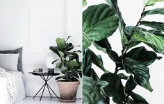 01. fiolfikus Arch Interior, Interior Plants, Interior Design, Ficus, Container Plants, Decoration, Indoor Plants, Interior Inspiration, Flower Power