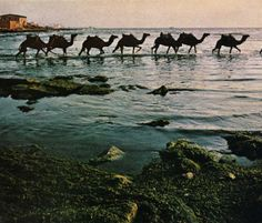 camel line across the water