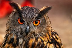 eagle owl_XXVI by ~deoroller on deviantART