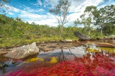 Caño Cristales, Colombia, the most beautiful river in the world Mysterious Places On Earth, Fjord, Adventure Tours, Travel Around, Trip Advisor, The Good Place, National Parks, Places To Visit, Around The Worlds