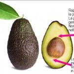 Coltivare l'avocado, tutte le istruzioni - Idee Green