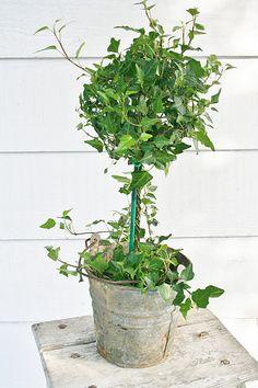 Container Gardening - Old Bucket