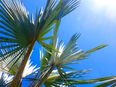 Palm Tree ~ Blue Sky ~ Summer Photography ~ Black & White Print. Click now to view prints starting at $7! With #coupon code PIN10 you receive 10% off originals by #NancyJCreates