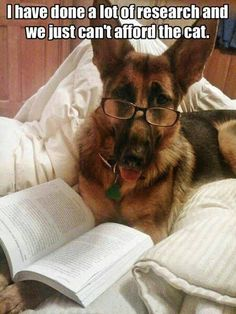 It doesn't matter how many dogs you have, you will never be able to afford a cat…(via German Shepherd Tales)