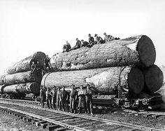 Couper des très gros arbres