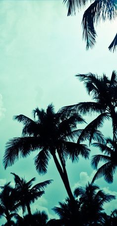 Turquoise Palm Trees