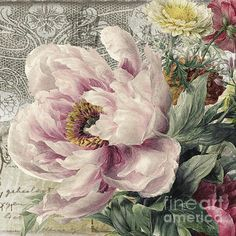 Mindy Sommers - Paris Peony