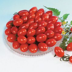 Award-winning Tomato Sugary has it all -- super-sweet flavor, a fun new shape, and huge, huge yields on plants that just keep growing up and up all season!