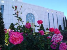 pink roses at the Madrid Spain Temple #mormon #lds #mormontemple #ldstemple