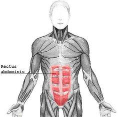 Diastasis Recti Information & Exercises