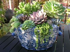 Succulents in a pretty blue and white dish~♥