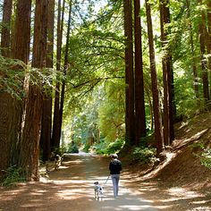 Redwood Regional Park, Oakland  On a clear day, the hiking trails afford views of San Francisco to the west and Mount Diablo in the east.