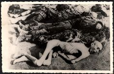Dachau, Germany, Corpses of prisoners, after the liberation of the camp.