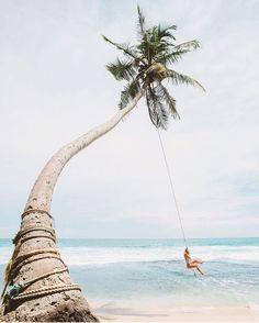palm tree summer love