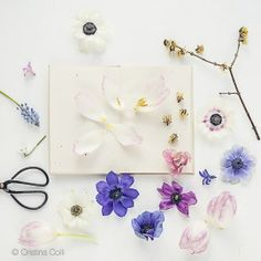 Spring #1 - Spring Collection - Modern still life - Limited Edition Giclée print © Cristina Colli