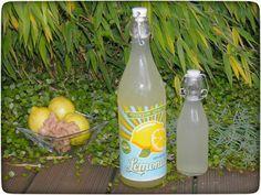 Zitronen-Ingwer-Wasser – Immun-Booster für die kalte Jahreszeit