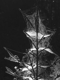 ✯ Cobweb Shadows :: Unknown Photography ✯