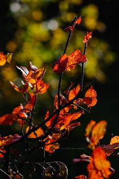 Jesienne słońce i kolorowe liście