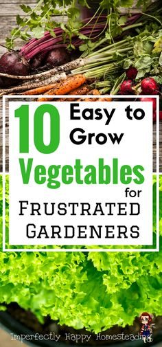 Hydroponic Gardening 10 Easy to Grow Vegetables for the Frustrated Gardener - gardening has never been easier! - Easy to grow vegetables - 10 vegetables anyone can grow. These are some of the easiest vegetables to grow in your garden and anyone can do it. Easy Vegetables To Grow, Planting Vegetables, Organic Vegetables, Vegetable Gardening, Veggie Gardens, Planting Plants, Planting Potatoes, Growing Veggies, Hydroponic Farming