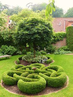 Gartenbuddelei: Wie geht es eigentlich ... dem Buchsknoten?