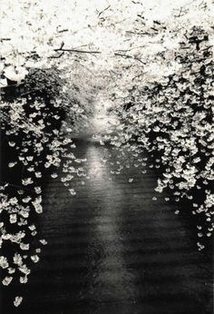 "Masao Yamamoto KAWA=FLOW #1534 (platinum print), 2011 platinum print, with custom Japanese wooden box 15 1/2"" x 11"""