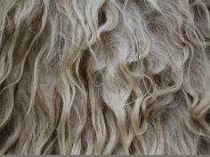 ivoorwitte Heideschaap wol #ruwewol #purewol #onbewerktewol #schaapswol #schapenwol #Purewol