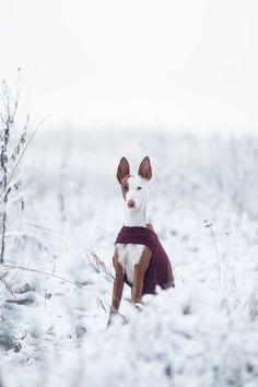 Mantel fur podenco