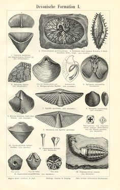 DEVONIAN FORMATIONS - PALEONTOLOGY - PALEOBIOLOGY, 1894 Original Antique Print