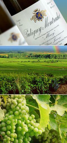 Puligny-Montrachet Miroy White Burgundy 2009 | puligny montrachet