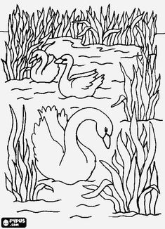 Realistic Swan Coloring Pages. Swan are birds known as aquatic animals, but most of their time is spent on land. Swan can be easily marked with a long neck and white fur. Swan has a. Bird Coloring Pages, Adult Coloring Pages, Printable Pictures, Nature Activities, Plant Drawing, Mosaic Art, Doodle Art, Line Art, Embroidery Patterns