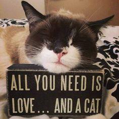 cats r love...