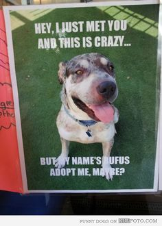 BEST ADOPTION POSTER EVER! -- How can you say no?! :-D -- @aspca