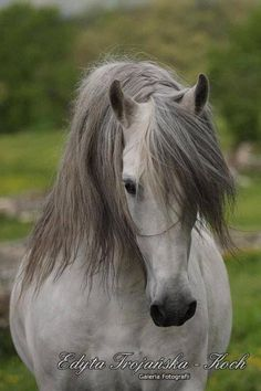 Beautiful head tilt and flowing mane makes this stunning horse look even more beautiful. Love the freedom it represents.