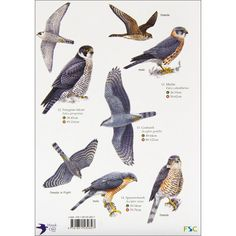 Image from http://shopping.rspb.org.uk/media/catalog/product/cache/1/image/9df78eab33525d08d6e5fb8d27136e95/r/0/r029216_a.jpg.