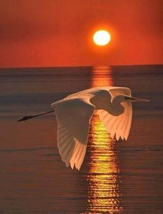 Beautiful Birds on Sunsets. Beautiful Sunset, Beautiful Birds, Beautiful World, Animals Beautiful, Beautiful Images, Animals Amazing, Pretty Animals, Beautiful Moments, Cool Pictures