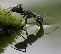 Wow! I hate ants, but this is a stunning picture!!!