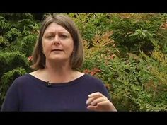▶ Pruning - Part 5 of 6 - Other Solutions To The Overgrown Yard - Plant Amnesty - YouTube