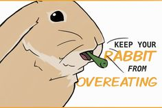 It's very important to make sure your rabbit has a healthy diet. We can encourage them to eat healthy food and stop being stubborn, picky eaters. Rabbit Diet, Rabbit Eating, Rabbit Playpen, Healthy Foods To Eat, Healthy Eating, Rabbit Behavior, Young Rabbit, House Rabbit Society, Cute Bunny