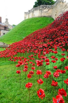 Lincoln Castle was the second venue to present Poppies: Wave by artist Paul Cummins and designer Tom Piper. The breathtaking sculpture, a sweeping arch. Lincoln 2016, Lincoln Uk, Lincoln England, Lincoln Castle, Arrows, First World, Countryside, Poppy, Waves