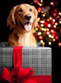 A Puppy for Christmas!
