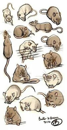 Rat art - tis a lovely example of practicing a subject manner in a learning/obse. - Rat art – tis a lovely example of practicing a subject manner in a learning/observing nature. Animal Sketches, Animal Drawings, Art Sketches, Art Drawings, Drawing Art, Animals And Pets, Cute Animals, Baby Animals, Strange Animals