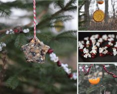 Decorate Your Outdoor Christmas Tree With Edible Ornaments That Birds Can Enjoy Eating Outdoor Christmas Tree Decorations, Outdoor Trees, Christmas Tree Ornaments, Christmas Crafts, Christmas Ideas, Xmas Tree, Christmas Time, Bird Ornaments, Green Christmas