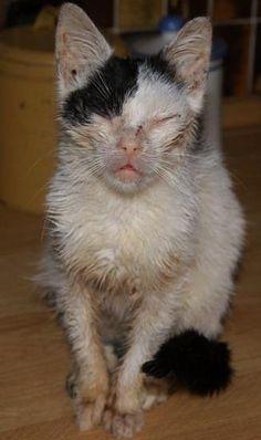 Soms is een dier niet meer te helpen omdat zij te ziek zijn Cats, Animals, Gatos, Animais, Animales, Animaux, Animal, Kitty, Serval Cats