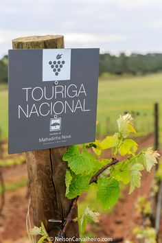 """Alentejo Wine Travel guide During the first couple of weeks of April 2016, I was a guest of Wine Tourism in Portugal in the Alentejo to write de Alentejo Wine Travel Guide. My mission was to explore what the NY Times described as the """"New Tuscany"""", offering you the ultimate guide to traveling the Alentejo through its wine..."""