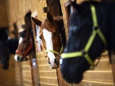 ly : Your Horse Source - Information on horse care, breeds, horse ownership, horseback riding, buying your first horse and more. Riding Stables, Horse Stables, Horse Riding, Horse Behavior, Paint Bar, Horse Facts, Horse Posters, All About Horses, Riding Lessons