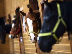 Opinie: Verborgen paardenleed